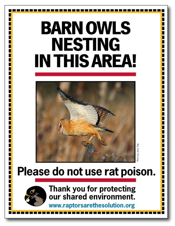Barn Owl Nesting flyer